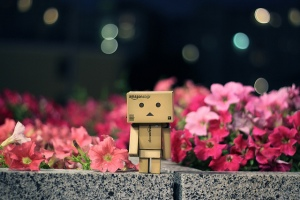 danbo-flower-photography-pink-Favim.com-223524